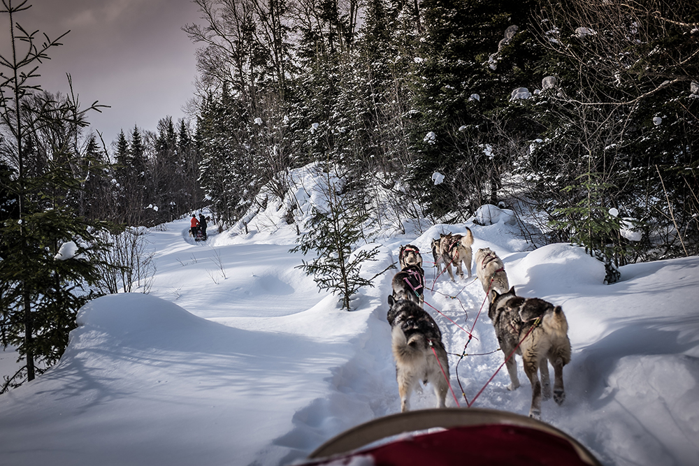 150225AVTSMT_dogsledding-2748