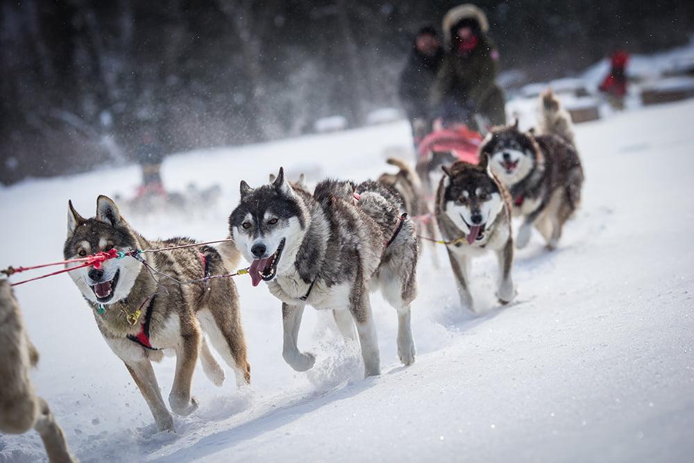 150225AVTSMT_dogsledding-5473