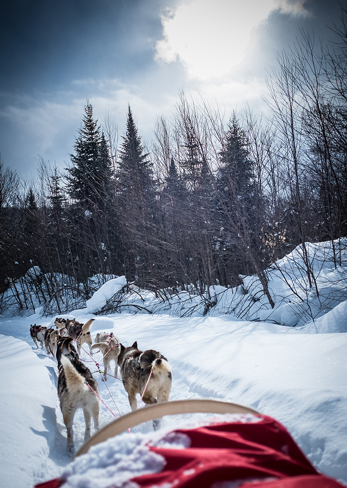 150225avtsmt_dogsledding-2677-small