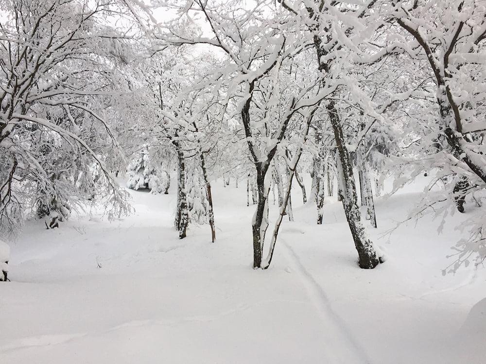 Tout blanc sur le versant Soleil - Photo prise le 15 décembre 2016